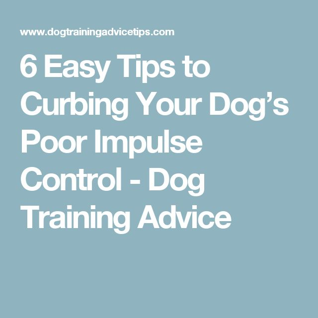 6 Easy Tips to Curbing Your Dog's Poor Impulse Control - Dog Training Advice