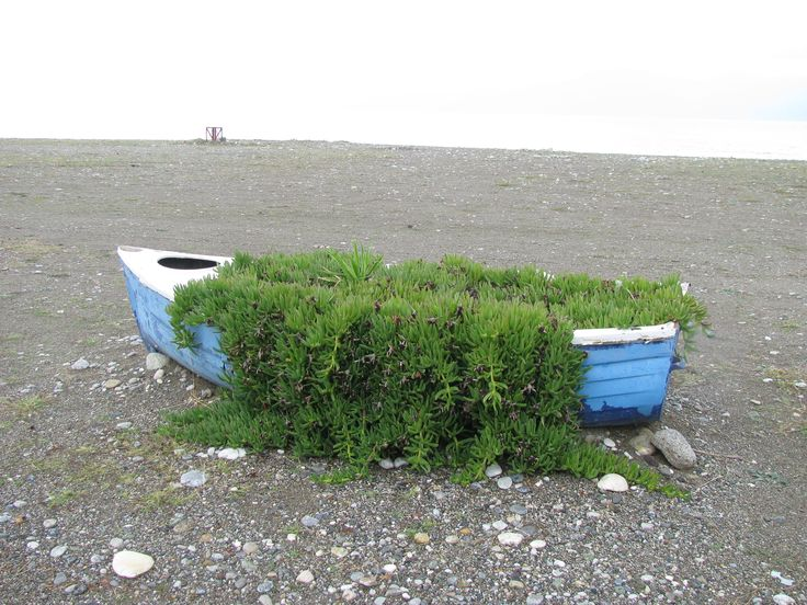 the spring in a boat . pefki -evia photo by maria koulouri