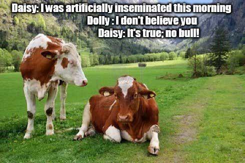 foto de (Funny Jokes) one liner jokes cow