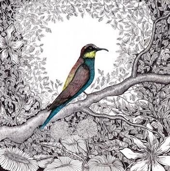 Pen & Ink Drawings - Kate Morgan - Artist & Illustrator