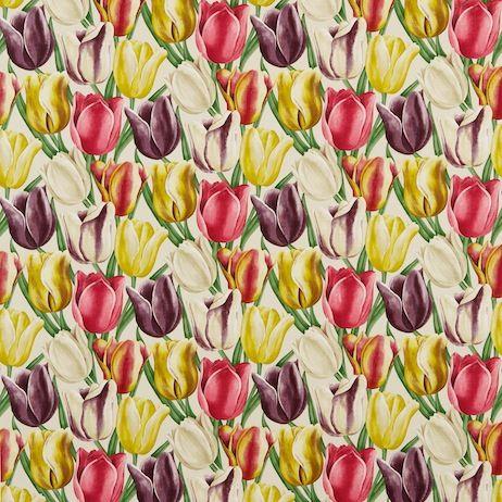 Sanderson - Early Tulips
