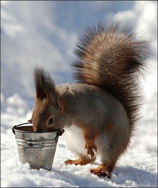 Oh bucket! It's empty.