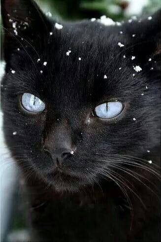 Ojos de nieve...