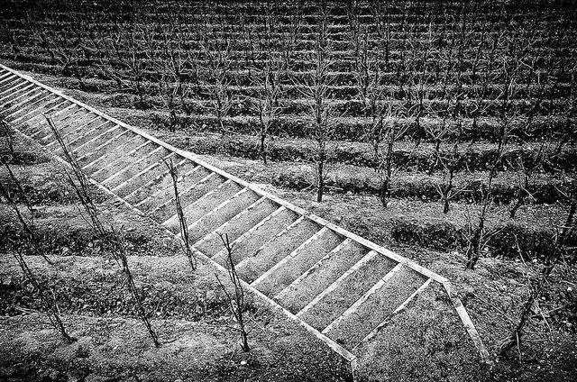 Stairs in the vineyard