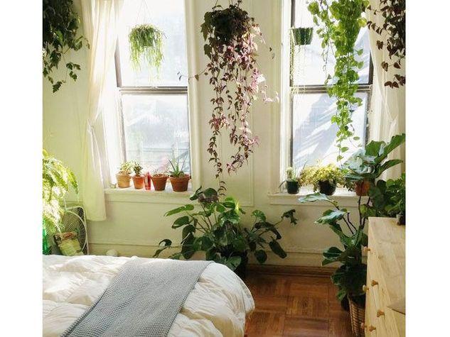 Oltre 25 fantastiche idee su piante della camera da letto su pinterest camera da letto - Piante per camera da letto ...
