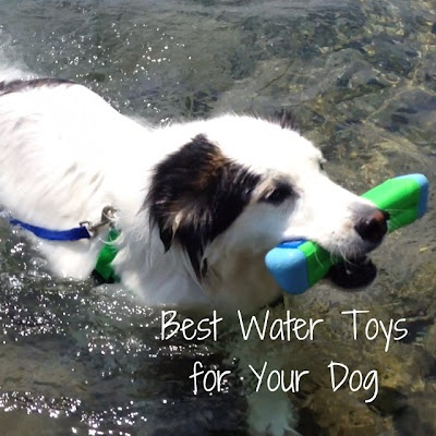 The best water toys for your dog.