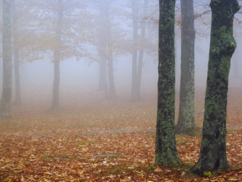 Foggy Fall, Misty Fall, Fall Time, Favorite Seasons, Fall Halloween, Fall Fog, Fall Weather, Autumn Stuff, Fall Seasons