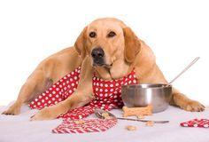 Cani Alimentazione - Come cucinare un pasto sano per il vostro cane