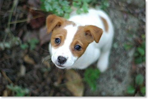 Google Image Result for http://www.connemaraterrier.com/Puppies/Puppies/shapingtemperament_files/hunter_pup.jpg
