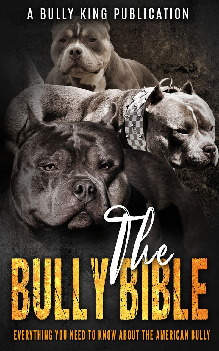 THE BULLY BIBLE: Everything You Need To Know About The American Bully - BULLY KING Magazine