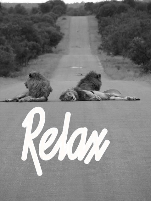 Relax: Big Cat, Lion, The Roads, Life, Inspiration, Quotes, Funny Stuff, Relaxing, Animal