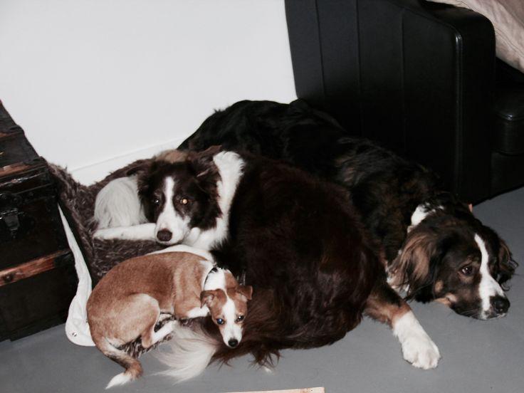 Dog Friends #animals #cute #koningbinc #friends @dogs @sweet
