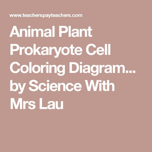 Animal Plant Prokaryote Cell Coloring Diagram... by Science With Mrs Lau