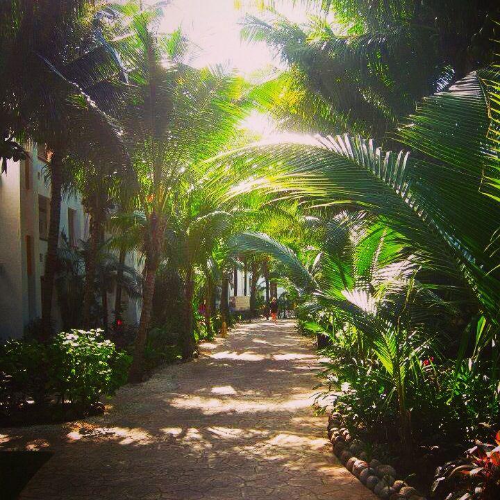 El Dorado Seaside suites - Palm-lined walkways