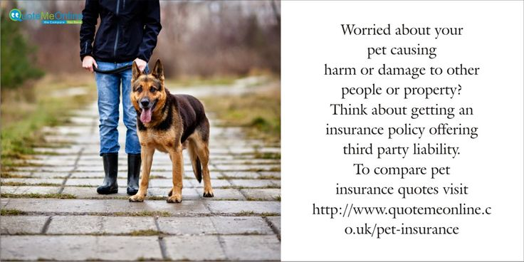 Worried about your pet causing harm or damage to other people or property? Think about getting an insurance policy offering third party liability. To compare ‪#‎petinsurancequotes‬ visit ‪#‎Quotemeonline‬. http://bit.ly/WePlV0
