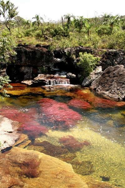The Cano Cristales is a river of Colombia located in the Sierra de la Macarena. For most of the year, Cano Cristales is indistinguishable from any other river: a bed of rocks covered in dull green mosses are visible below a cool, clear current. However, for a brief period of time every year the most amazing transformation occurs - the river blossoms in a vibrant explosion of colors.