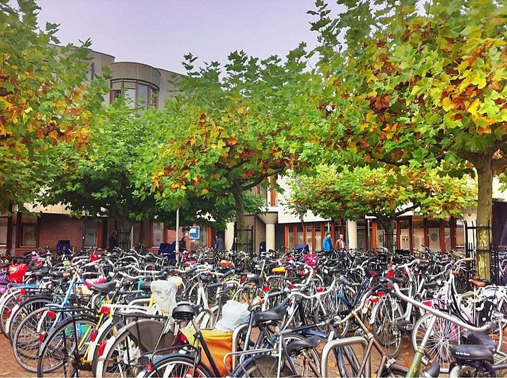 Reflections on being an international student at Leiden University