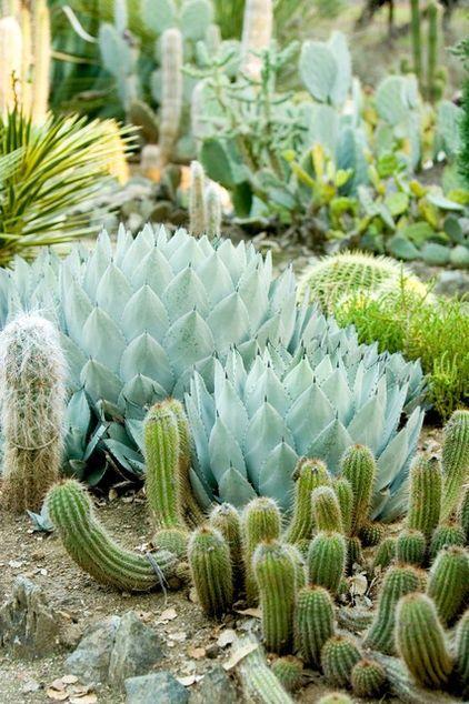 612 Best Cactus Succulent Gardens Images On Pinterest - cactus garden plan