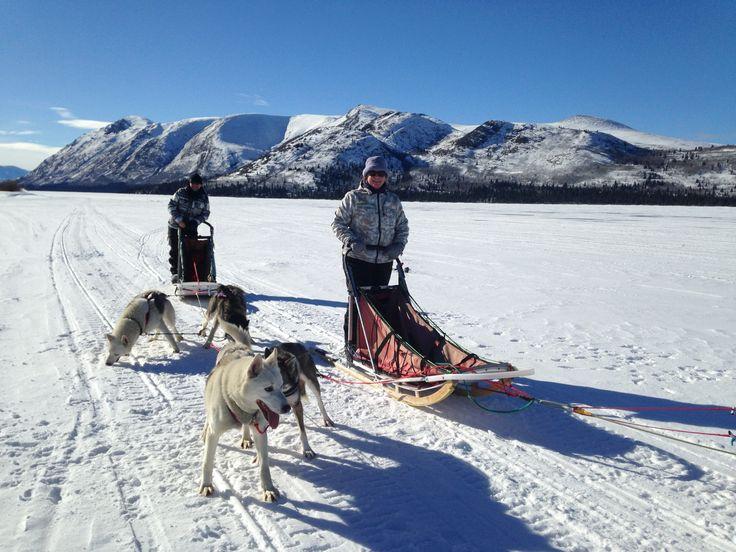 Dog sledding Yukon Territory