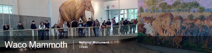 The Waco Mammoth Site has become a National Monument!!! As of July 10, 2015.  Terrific news!  The city of Waco, with Baylor U, has been maintaining this wonderful cache of Pleistocene remains--Columbian mammoths, camels, and other exotic flora from ~60,000 years ago, and now it will get the extra protection and resources that come with the Nat. Monument designation.
