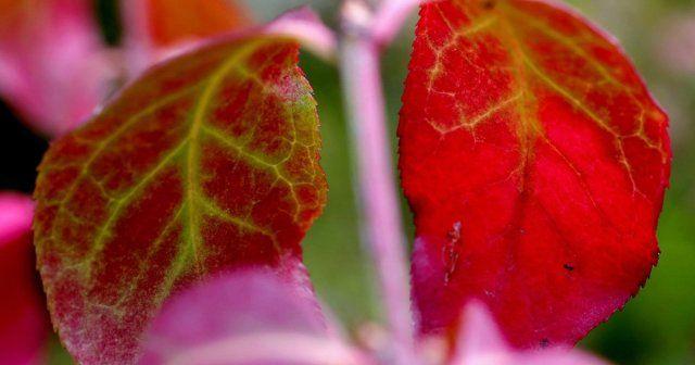 Washington Park Arboretum flowers turn to a new season