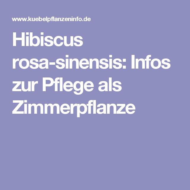 17 Best Ideas About Hibiskus Pflanzen On Pinterest ... Schone Passionsblume Pflege Tipps Zimmerpflanzen