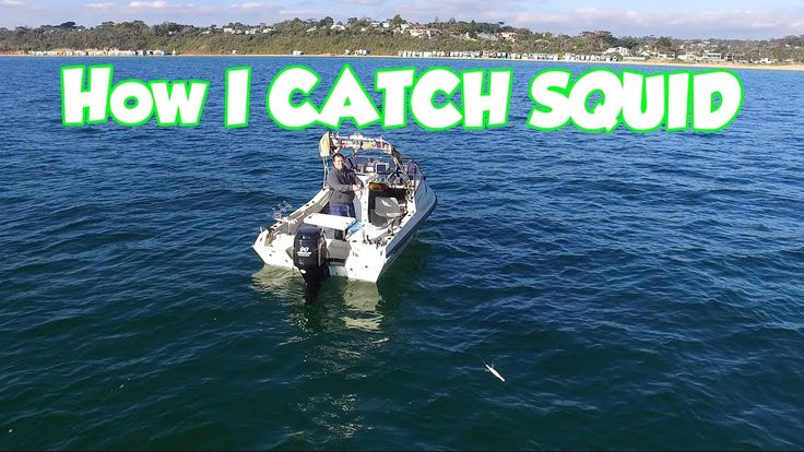 Squid Fishing How To Catch Them In a Boat Jig selection tips Squid Fishing In My Boat some tips EGI Fishermen How To Catch Some Fresh Bait . Jig selection tips  , Best Tackle . There are many ways to catch squid , using you sounder & chart plotter  and good tackle can lead to some fantastic catches.  Reedy's Rigz : https://snapper-rigs.com/ Snapper Fishing Tackle  http://stores.ebay.com.au/snapperfishingtackle Facebook https://www.facebook.com/snappertackle/