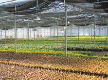 Norval Farm - Our 83 acre #farm in Norval is located approximately 50 kilometres northwest of Toronto, and is the home of our propagation facility and #perennial production. Propagates over 60% of all products that we grow, so we know the care and attention to detail these #plants receive every step of the growing process.