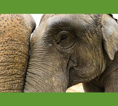 Win a high-resolution 11 x 17 professional photographic print from our Elephant Conservation and Care Center -- suitable for framing!