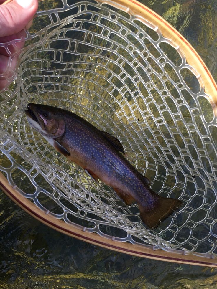 196 best images about fly fishing and flies on pinterest for Fly fishing west virginia