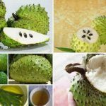 The Leaves of Soursop Are 1000 Times Stronger at Killing Cancer Cells Than Chemotherapy