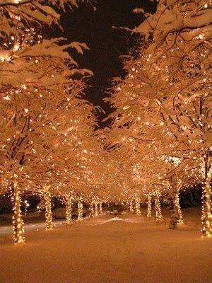 verlichte bomen.