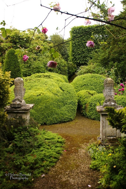 277 best conifers images on Pinterest | Evergreen garden ...