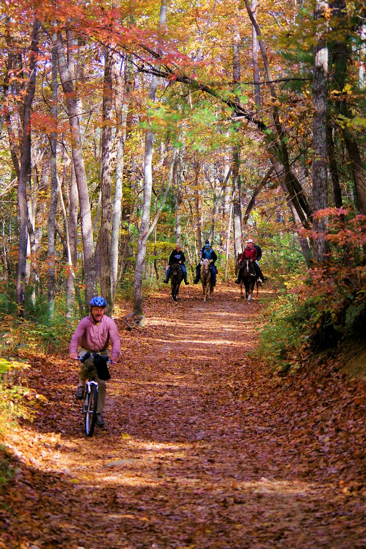 Hiking, biking and horseback riding trail in DuPont State Forest in North Carolina mountains