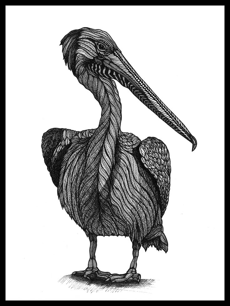 PELICAN. Ink on paper. Black and white. 20x30cm  #deltakappadesign
