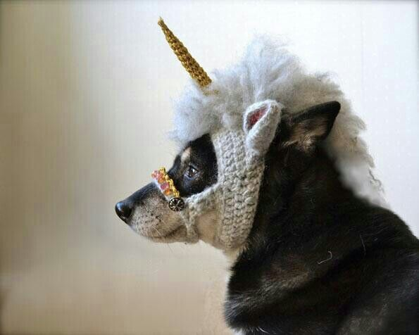 They said I could be anything, so I chose to be a unicorn