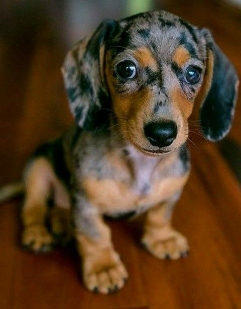Such A Very Cute Puppy Very Cute Dogs Very Cute Puppies