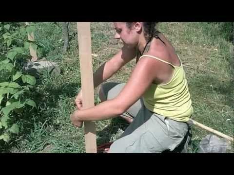 Coltivazione dei frutti di bosco: il sostegno per i lamponi - YouTube