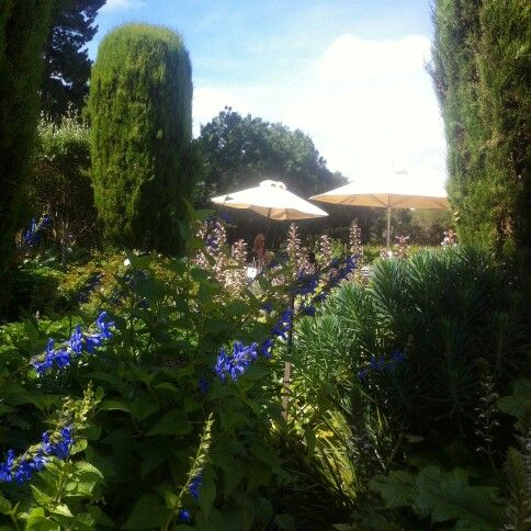 One of the best ways to spend a sunny Thursday: wine, gardens & sunshine in the Mornington Peninsula.  Our daytour visits T'Gallant Winery