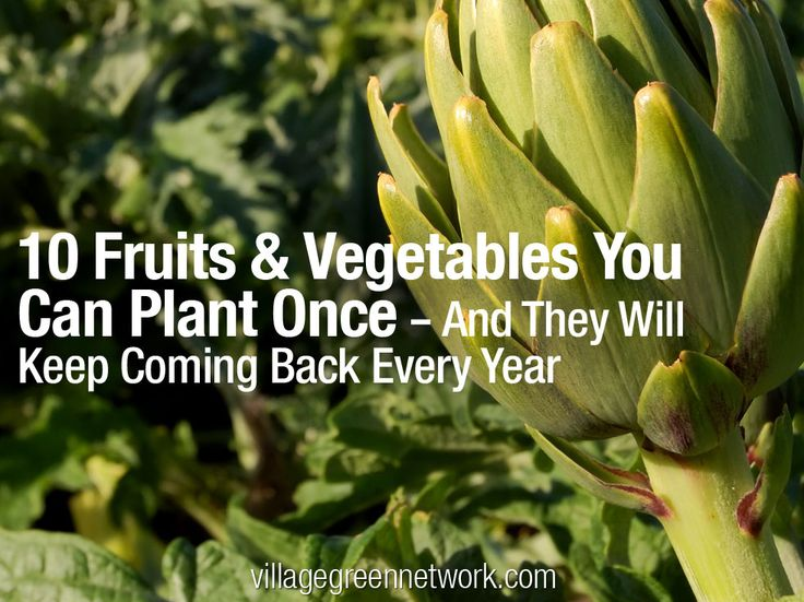 10 Fruits & Vegetables You Can Plant Once — And They Will Keep Coming Back Every Yea