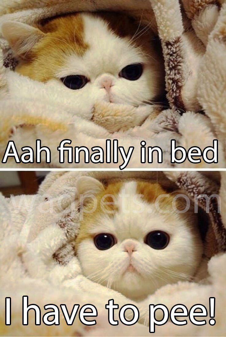 Aah Finally In Bed Cute Funny Animals Funny Animals Cute Cat Memes