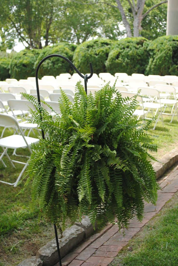 flower alternatives for aisle shepard hooks | We had 2 ferns on shepherds hooks in the back of the aisle