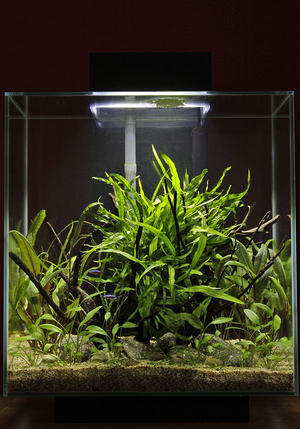 46 best images about aquascape fluval edge 46 on pinterest fish tanks aquarium filter and. Black Bedroom Furniture Sets. Home Design Ideas