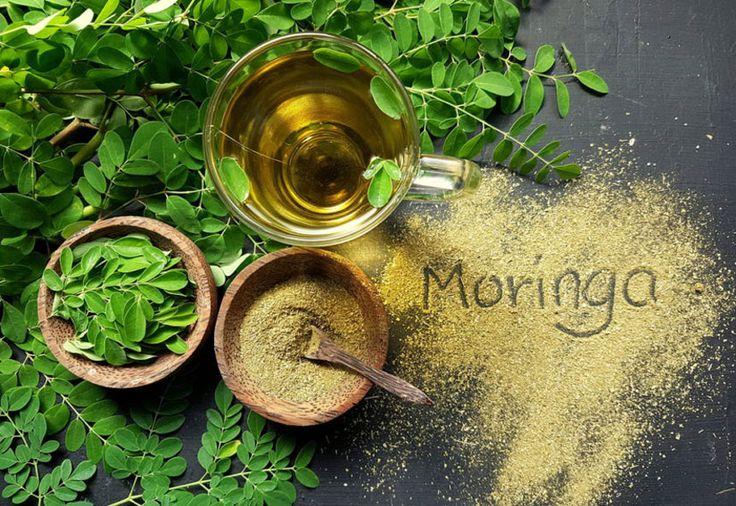 Le Moringa : un arbre aux nombreuses vertus pour la santé ...