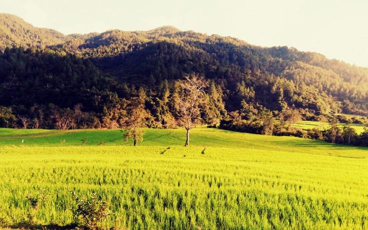 Rice fields in Toraja