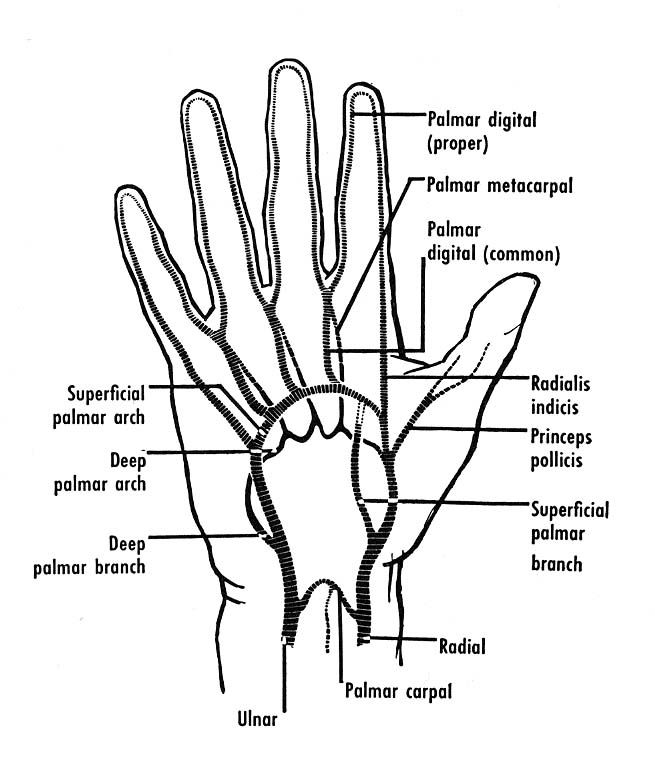 372 Best Images About Upper Limb