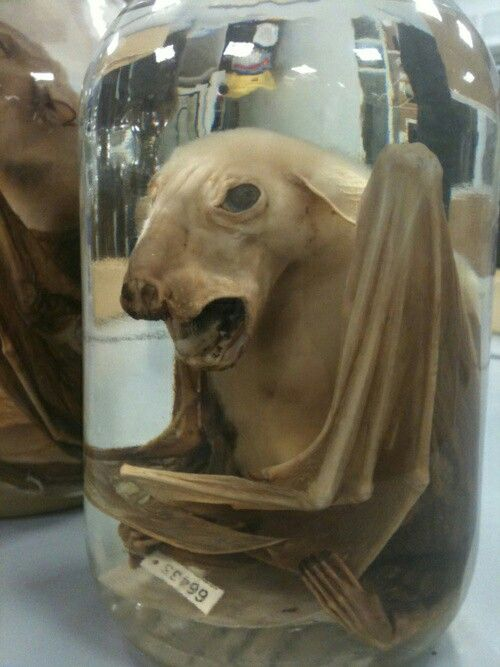 43 best teehee taxidermy images on pinterest bad for American kitchen cabinets placerville