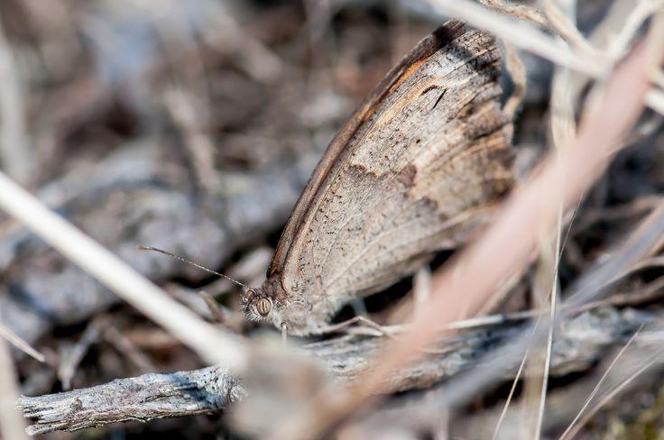 butterfly camouflaged by Graziella Serra Art & Photo on 500px