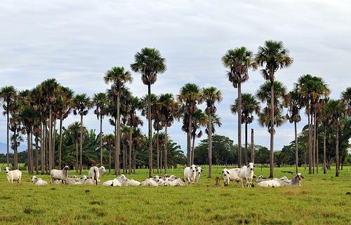 En la Orinoquia colombiana aún existen áreas extensas donde se conserva su patrimonio natural. La ampliación de la frontera agrícola es una oportunidad para aumentar la producción de bienes y servicios ambientales, pero también es una amenaza potencial porque puede degradar los recursos naturales y las funciones productivas de los suelos, entre otros.