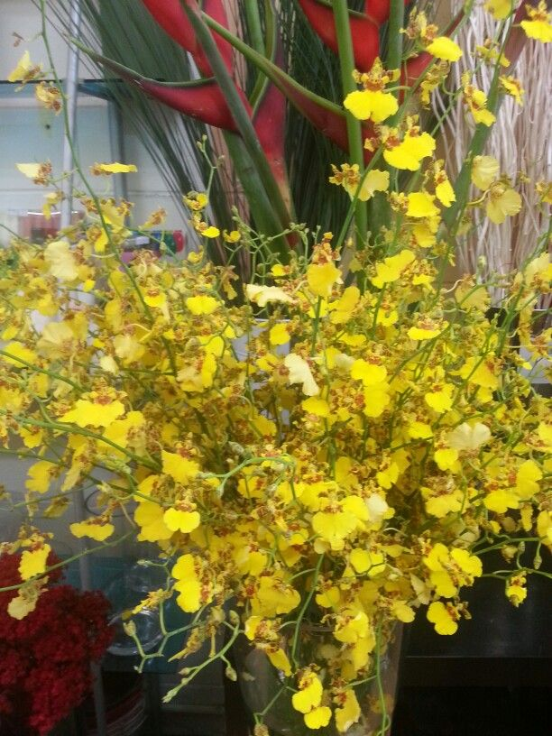 Wow Dancing lady, Yellow Singapore Orchard.